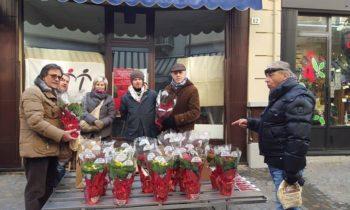 Stelle di Natale 2015 Provincia di Torino