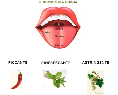 Il Gusto della Lingua